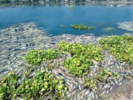 Muerte de peces Egipto