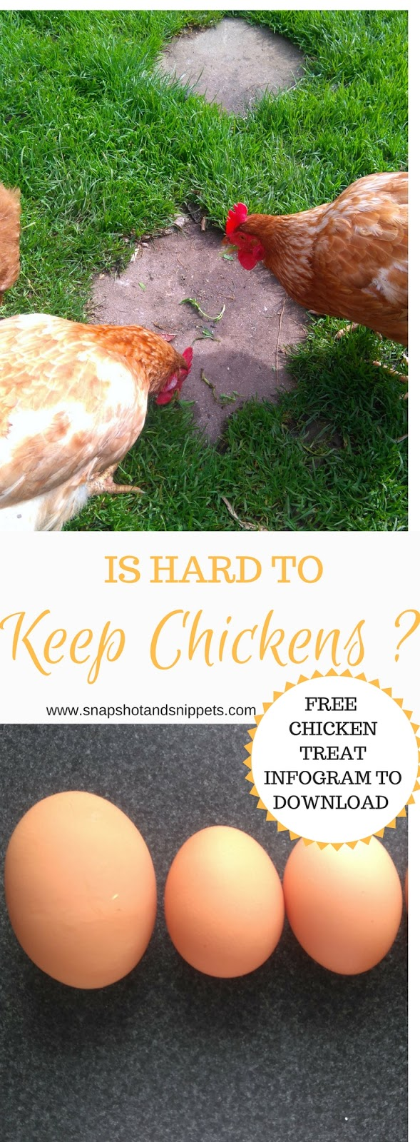 Is it hard to Keep Chickens? - Snapshots and Snippets