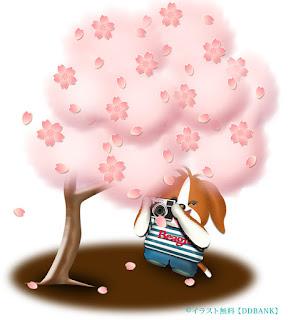 桜をカメラで撮る可愛い犬キャラのイラスト