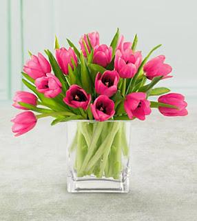 Jual Bunga Tulip Murah