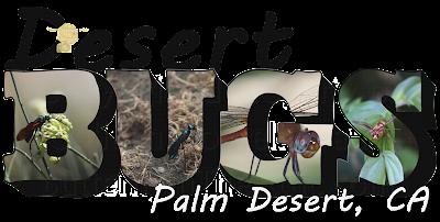 Desert Bugs Big Letter