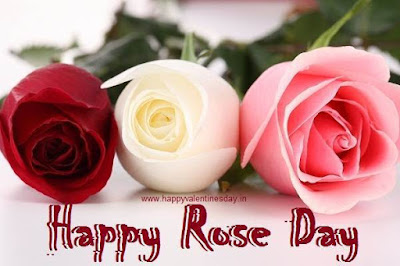 Rose Day 2019 SMS | Top 10 Messages Rose Day 2019 Wishes & Greetings