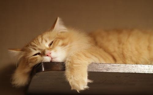 7 Langkah Praktis Bagaimana menghilangkan sikap malas?