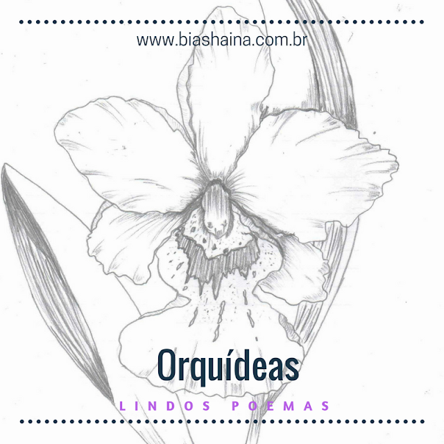 Lindos Poemas Sobre as Orquídeas