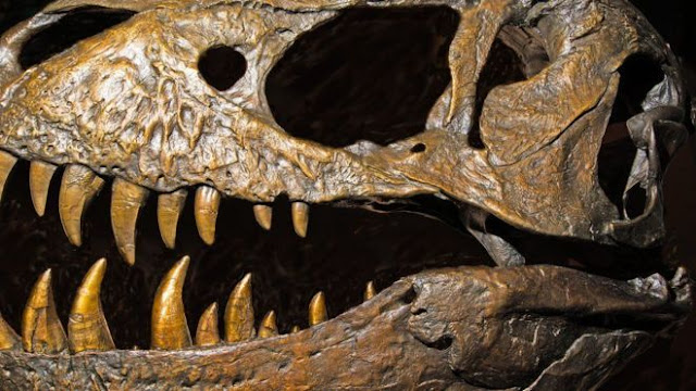 Hay nueva evidencia sobre el orígen de los dinosaurios