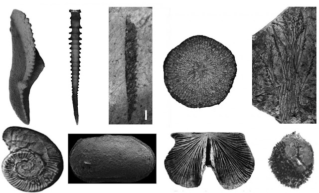 Devonian integrative stratigraphy and timescale of China