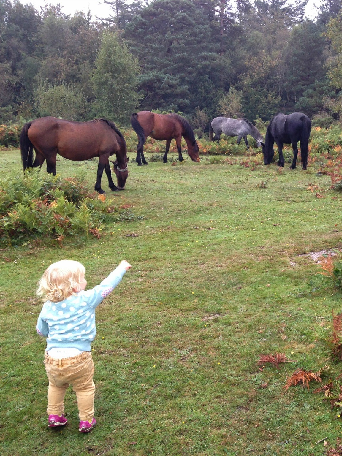 Five Things To Do In The New Forest Tin Box Traveller