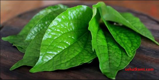 cara mengobati bisul dengan daun sirih