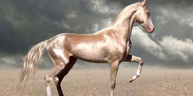Inilah Kuda Tercantik Di Dunia, Berbulu Emas