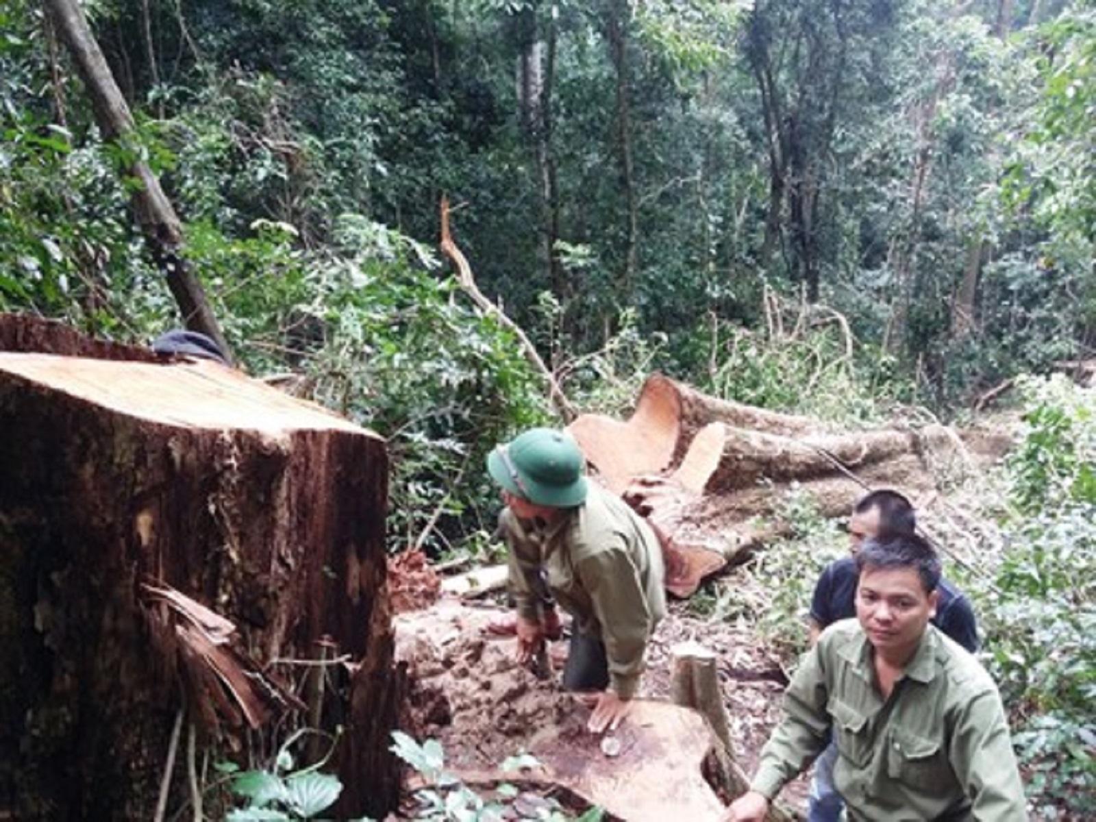 Gia Lai: Kỷ luật khiển trách Chủ tịch huyện K'Bang do buông lỏng quản lý, bảo vệ rừng