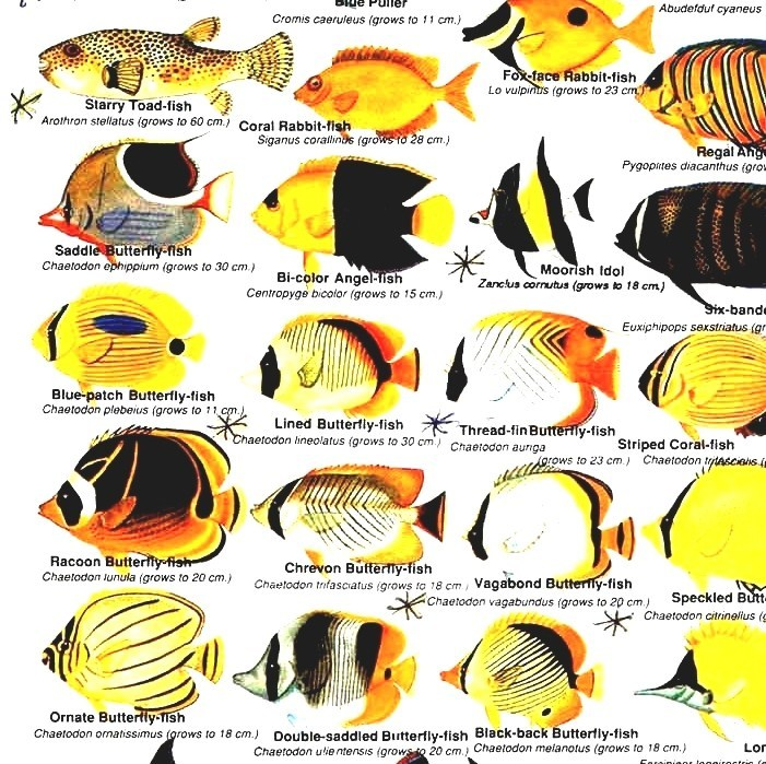 List Of Marine Aquarium Fish Species