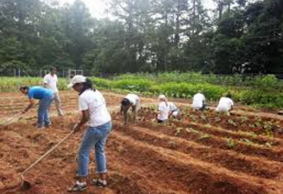 Land preparation for Watermelon Cultivation