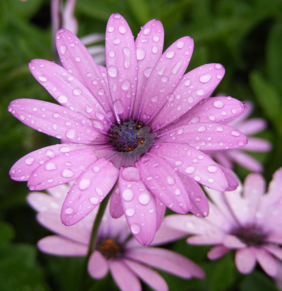 Get Images: Beautiful Flowers in Purple Color