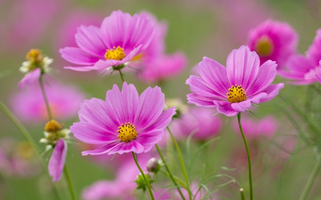 Beautiful Pictures Of Flowers