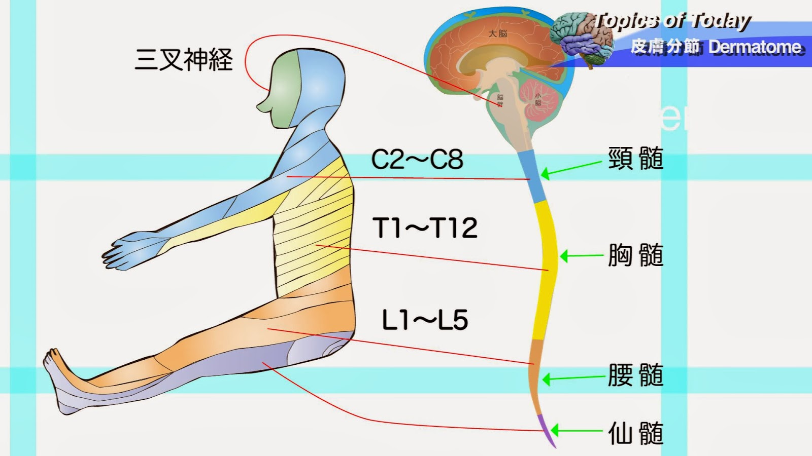 理学療法士 PhysiTheraResearch