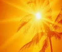 sun behind a palm tree