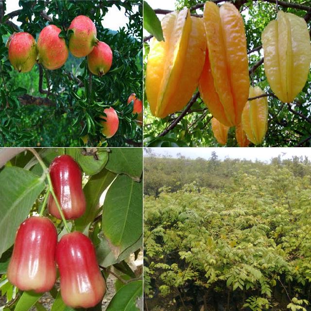 Agro Wisata Citra-Delima Mranak Demak