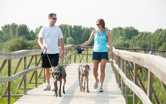 Become Healthy And Lose Weight By Walking With Your Dog