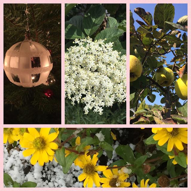 Weihnachtskugel, Holunderblüten, Quitten, Husarenknöpfchen