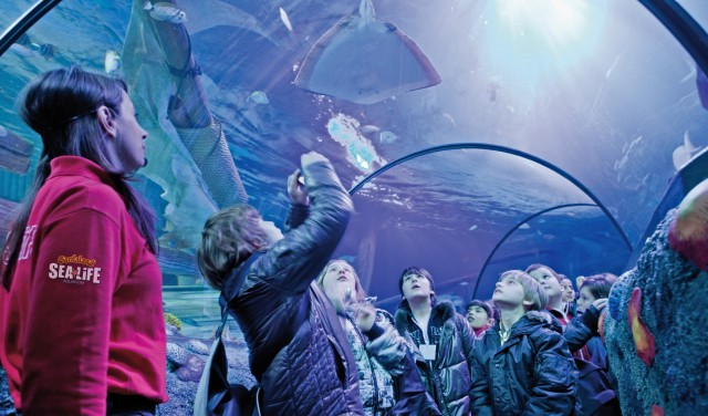 gardaland-sea-life-aquarium-poracci-in-viaggio