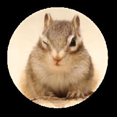 Love!!Squirrel!!!