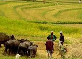 Farming In Sri Lanka මහ පාර Main Road