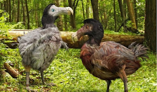 burung Dodo  yang punah (Raphus cucullatus)