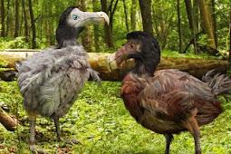 burung dodo burung bodoh yang punah