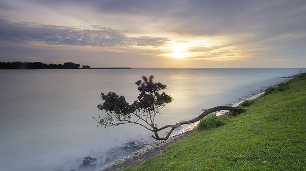 Foto Long Exposure pohon di tepi laut Tanpa Filter ND
