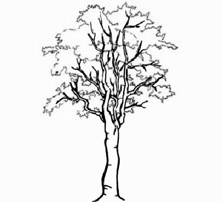 Gennia News Desenhos De Arvores