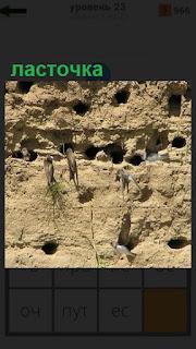 1100 слов в песке на холме сделаны гнезда для ласточек 23 уровень