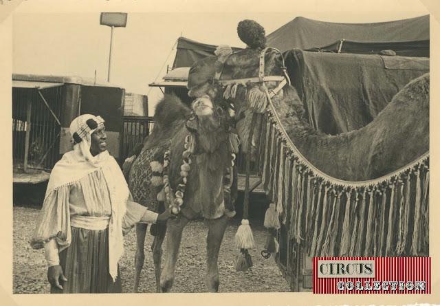 Dromadaire dans les coulisses du Cirque  Darix Togni 1954
