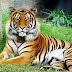 Lelaki Curi-Curi Masuk Zoo Mati Dibaham Harimau