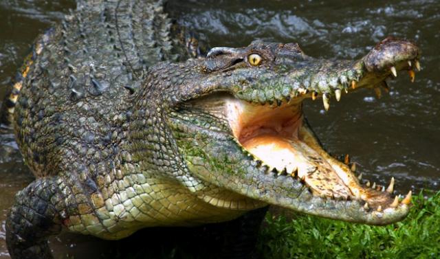 стратегия бинарных опционов аллигатор