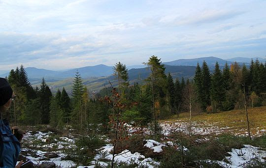 Widok z polany na stokach Kiczory.