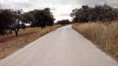 по оливковым полям