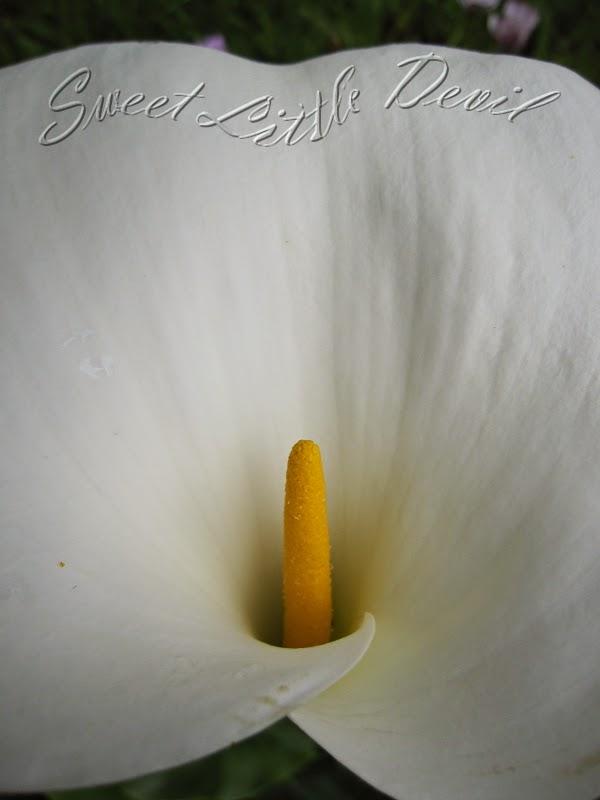 belle fleur blanche