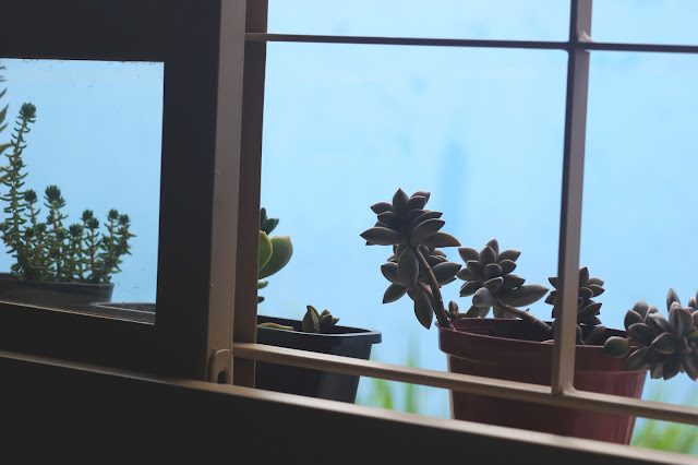 O que aprendi cultivando suculentas- Creyssa Phyna, por Anna Kuhl