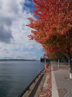 Toronto, waterfront, bord de l'eau, arbres colorées, automne