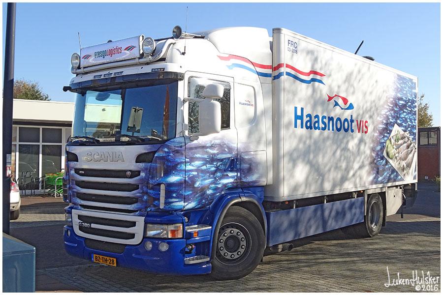 SCANIA: Scania G380 - Fresgo Logistics / Haasnoot vis