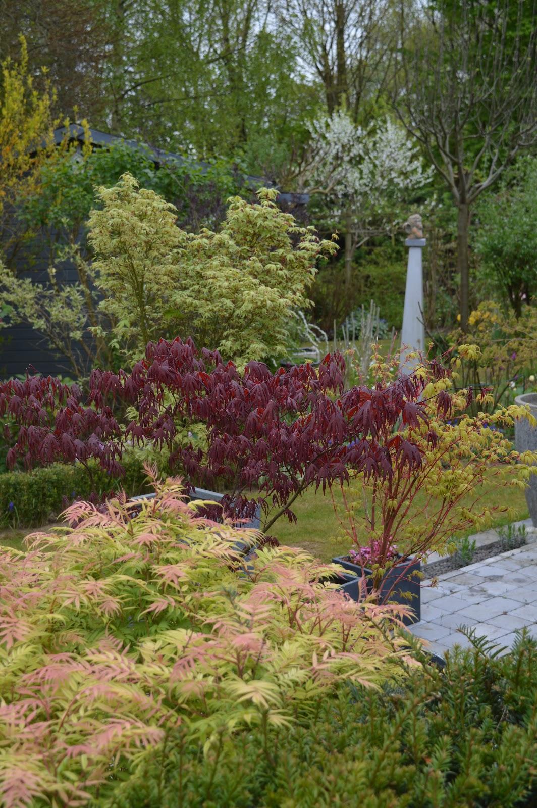 Passionn ment jardin de la couleur au jardin for Au jardin des couleurs