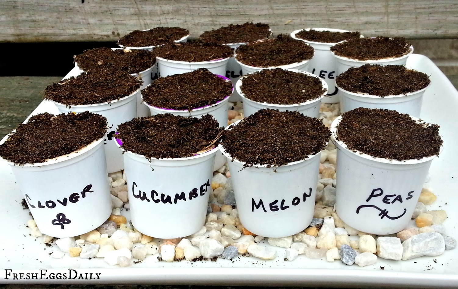 starting seeds in k-cups