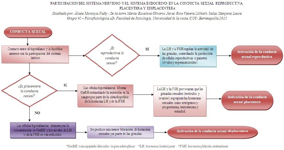 Imagenes Del Sistema Endocrino