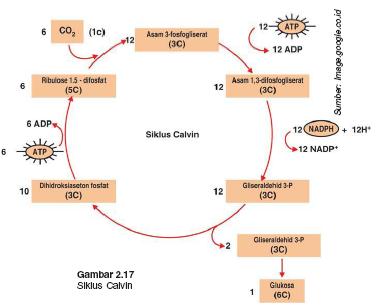 Toksisitas Sianida – Sejarah Sianida, Metabolisme Keracunan dalam Tubuh, dan Penanganan