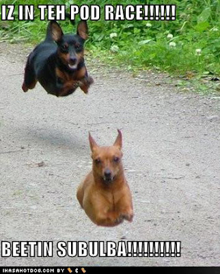 Funny Dogs And Cats With Captions