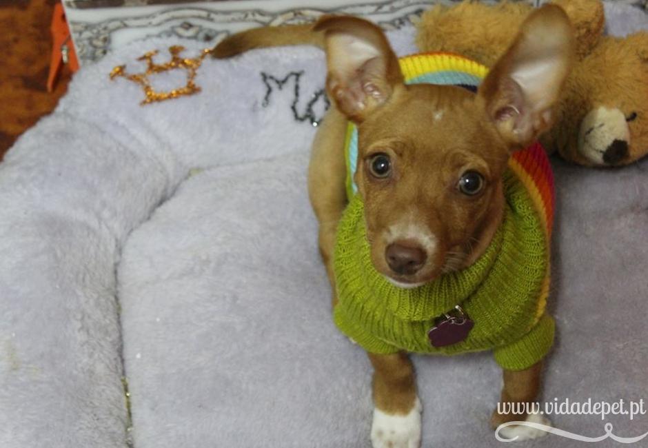Como escolher os melhores brinquedos para cães + portugal+ animais de estimação + blogue de pets + animais de estimação + pedro e telma + vida de pet