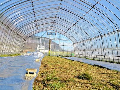 ビニールハウス 稲の苗
