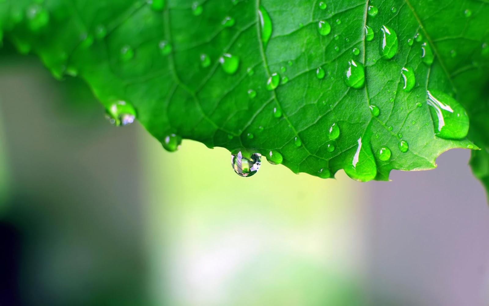 Nature Rain HD Wallpapers