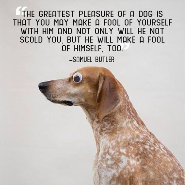 Quotes About Pets: Mail2Day: 21 Great Quotes About Pets