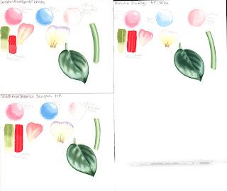 Watercolour paper test D-R Langton Prestige, Moulin du Roy and Strathmore Imperial 500